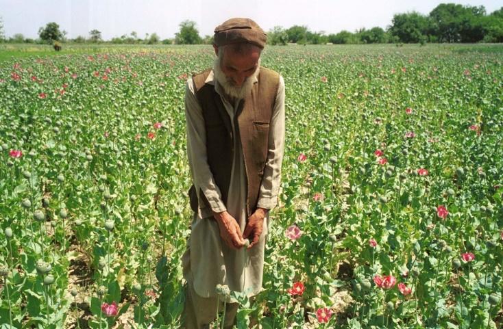 Αφγανιστάν: «Σκούπα» στις φυτείες οπίου της επαρχίας Χελμάντ - Ειδήσεις -  νέα - Το Βήμα Online